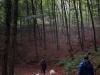 Durch den Wald 09