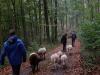 Durch den Wald 10