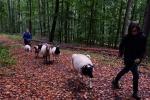 Durch den Wald 05