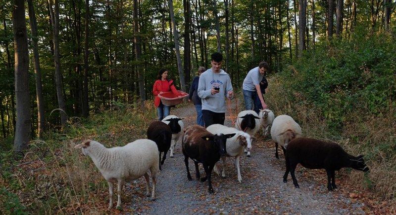 Schafe Wald Langer Berg 08