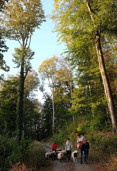 Schafe Wald Langer Berg 11
