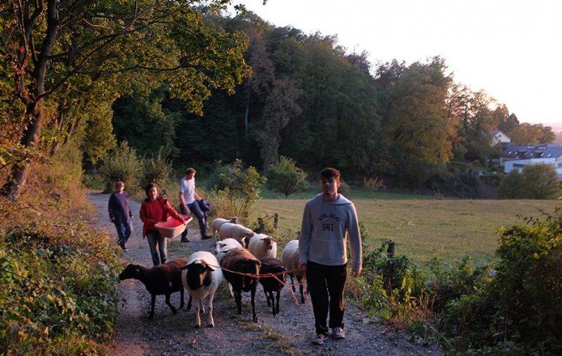 Schafe Wald Langer Berg 14