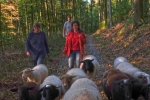 Schafe Wald Langer Berg 02