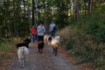 Schafe Wald Langer Berg 07