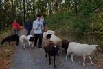Schafe Wald Langer Berg 09