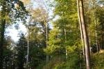 Schafe Wald Langer Berg 10