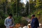 Schafe Wald Langer Berg 12