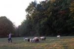 Schafe Wald Langer Berg 13