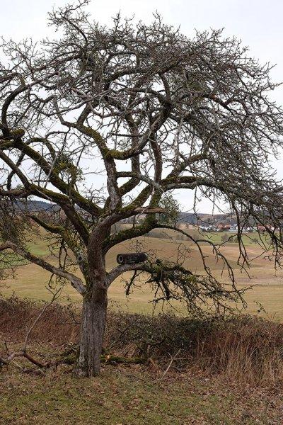 Steinkauzröhre im alten Apfelbaum