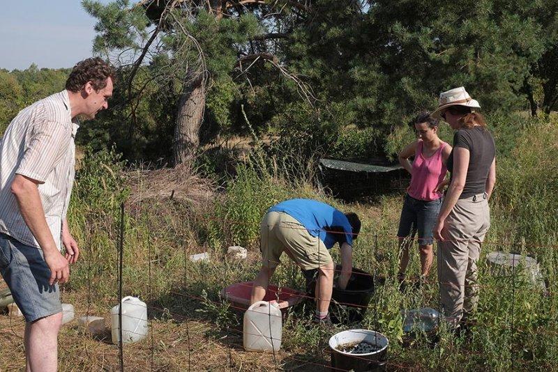 Einsatz Bienenweide - Schafgruppe 1