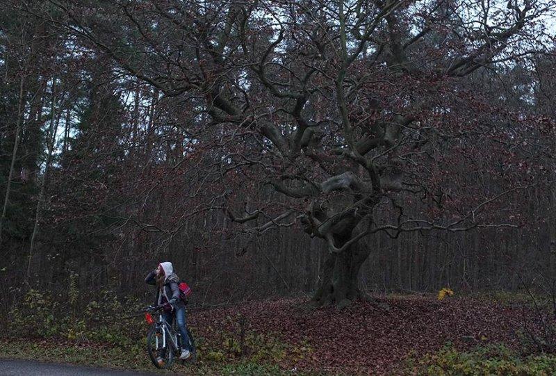 02 Wald bei Seeheim
