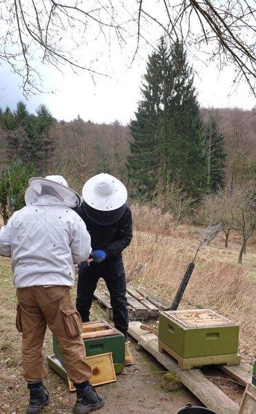 Frühjahrsputz am Bienenstand 7