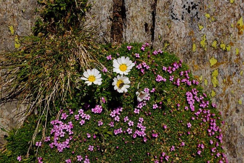 10 Blütenkissen am Scheibler 2