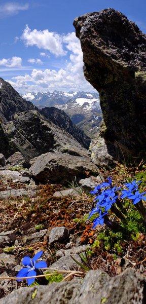 11 Blaue Blume am Scheibler 2