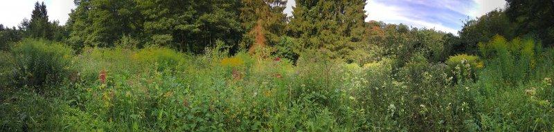 Blumenwiese Etzwiesen 1