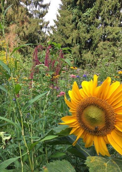 Blumenwiese Etzwiesen 4