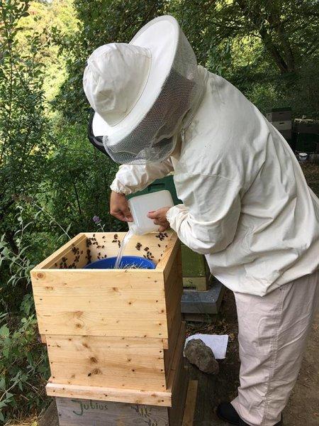 Imkerstand - Bienen füttern