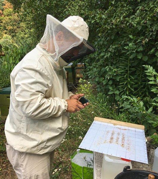 Imkerstand - Varroa zählen 1