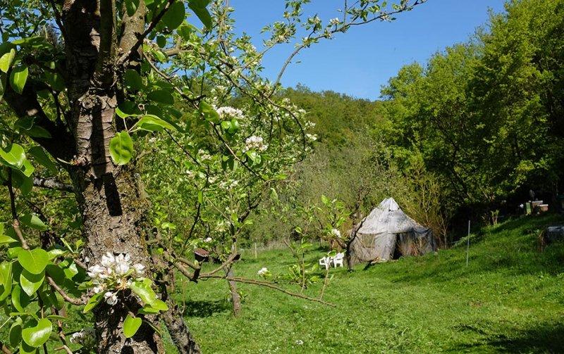 Birnenblüte auf den Etzwiesen