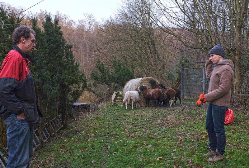 Heu fu?r die Schafe auf den Etzwiesen 1