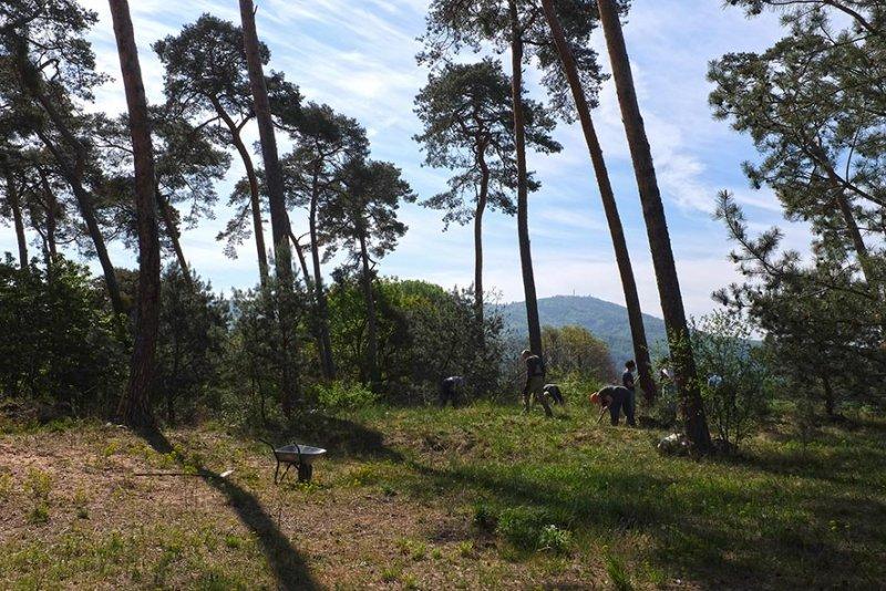 Bickenbacher Düne 08