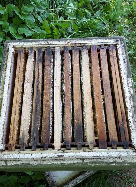 Imkerstand Etzwiesen - Honigräume
