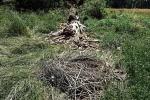 03 Umgestürzter Nestbaum