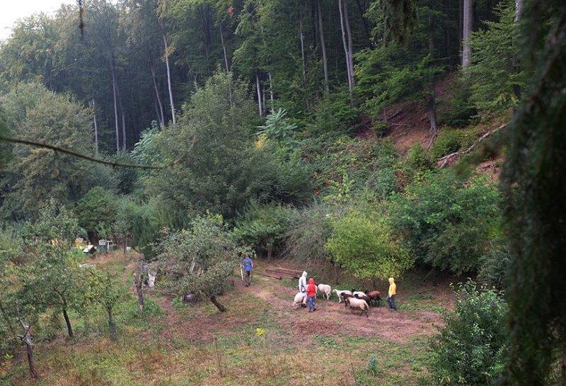 Schafbeobachtung vom Baumhaus Etzwiesen 1 10x15s