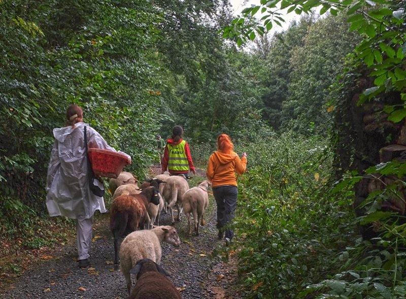 Schafwanderung 14 10x14s