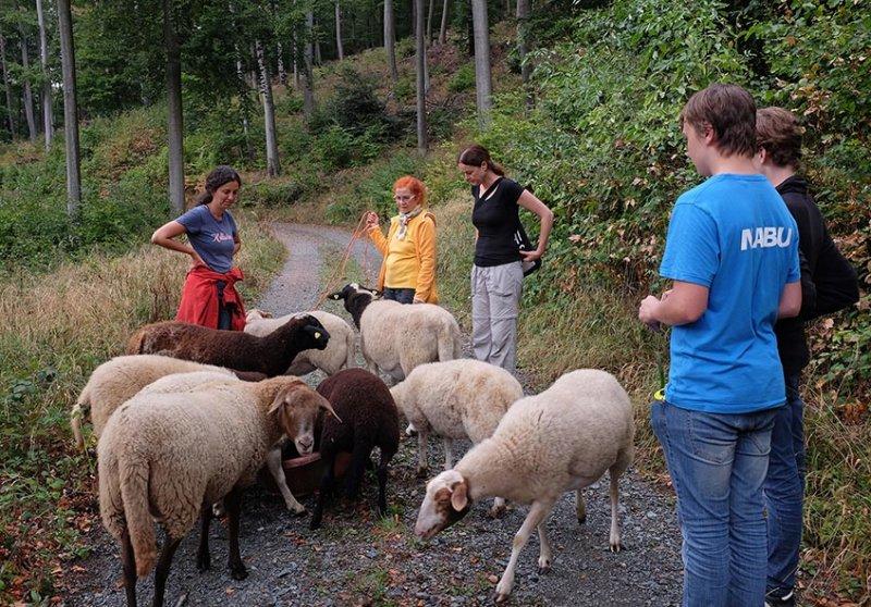 Schafwanderung 24 10x15s