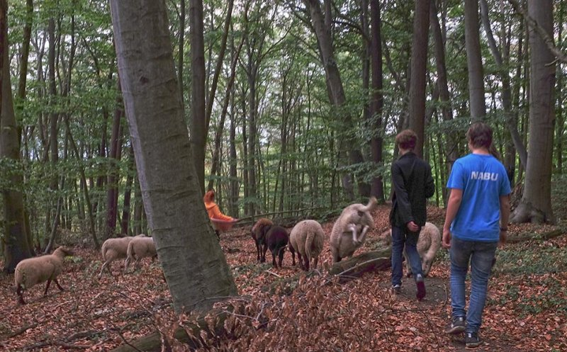 Schafwanderung 31 10x15s