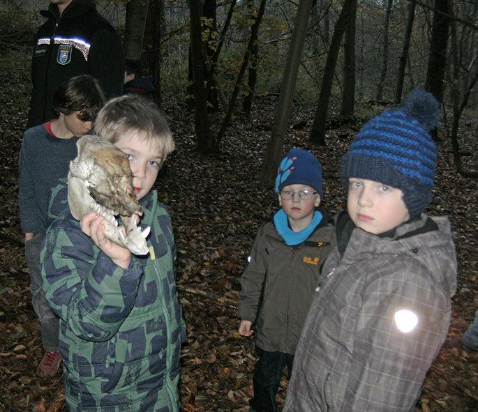 Füchse beim Eibenschutz 04