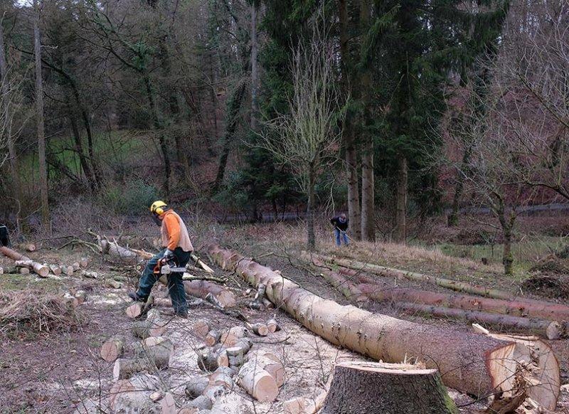 Waldarbeit an den Etzwiesen 1