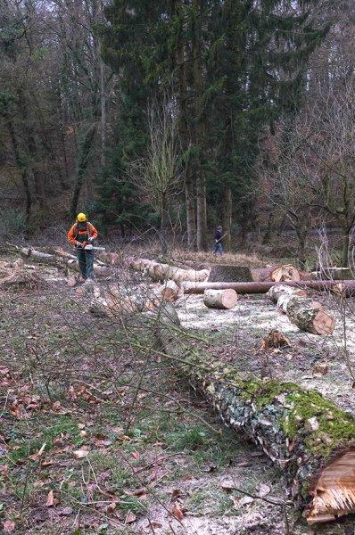 Waldarbeit an den Etzwiesen 2