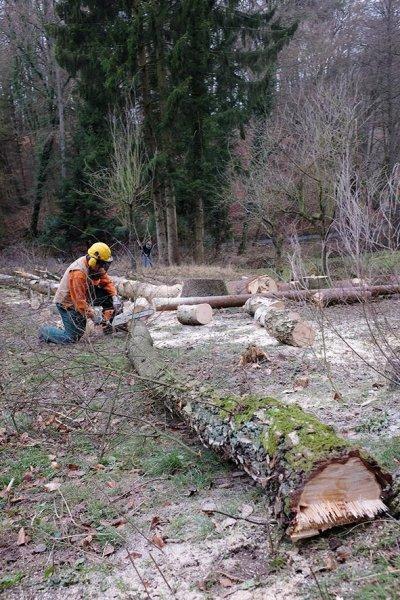 Waldarbeit an den Etzwiesen 3