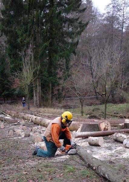 Waldarbeit an den Etzwiesen 4