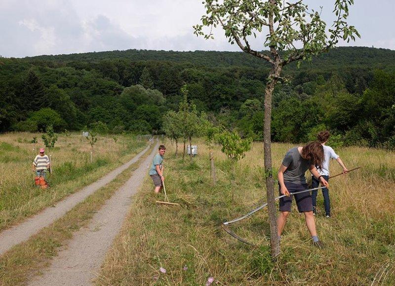 NABU Kirschgarten Mäheinsatz 09