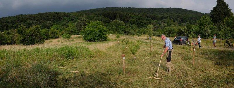 NABU Kirschgarten Mäheinsatz 14