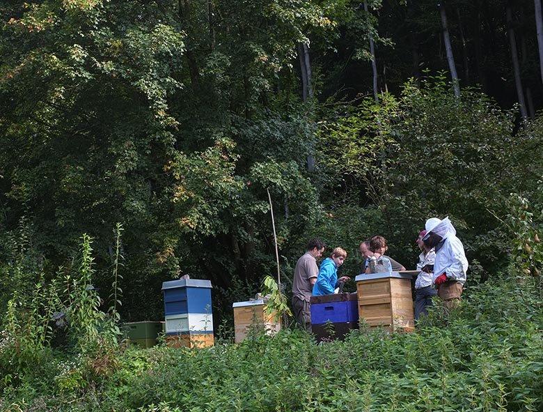 Bienenstand Etzwiesen 2