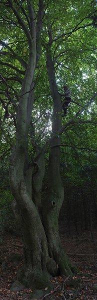 Embla im Habitats-Baum 1