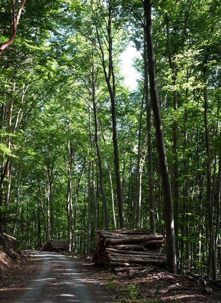 Holzlager in der Stilllegungsfläche im Staatswald 2 10x13s