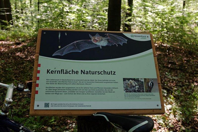 Schild Hessenforst Stilllegungsfläche Staatswald 1
