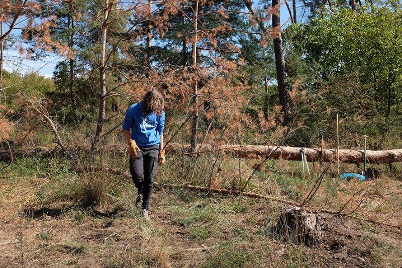 Arbeitseinsatz Bickenbacher Düne - Baum fällt 3 10x15s