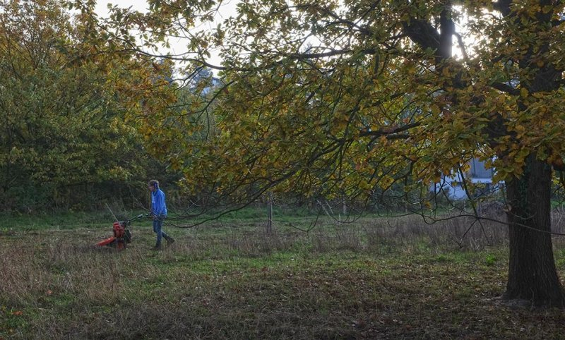 Aktionstag-Wühlmausgarten-Wiesenmahd-Bienenweide-08-10x16s