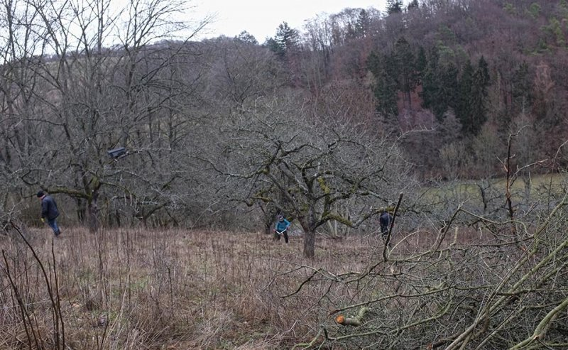 Streuobstwiese Nieder-Beerbach 16 10x16s