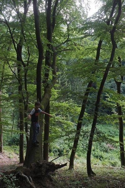 Wald über Etzwiesen 1