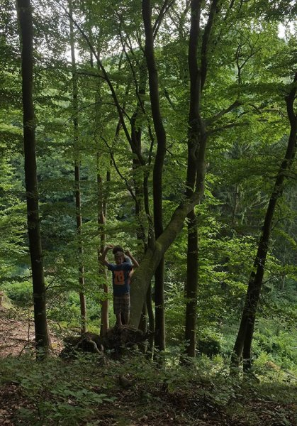 Wald über Etzwiesen 2