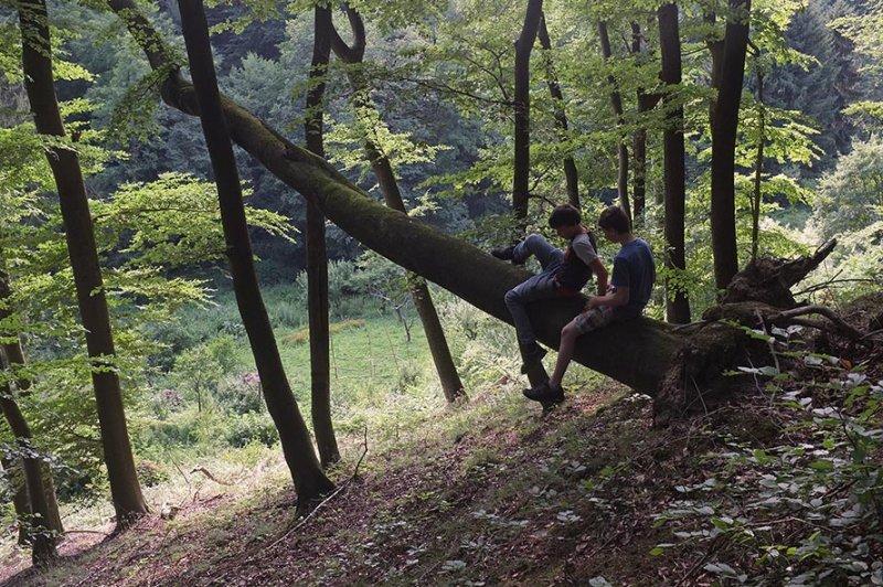 Wald über Etzwiesen 3
