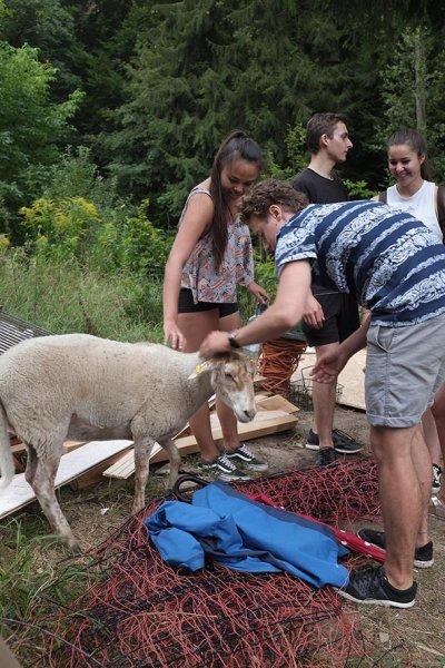 Schafe am Baumhaus 1