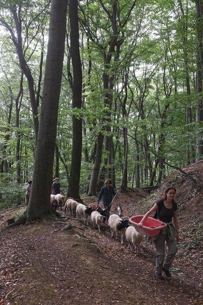 Schafwanderung in den Odenwald 7
